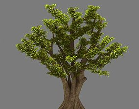 Plant - Ginkgo Tree 01 3D