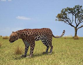3D model Leopard Panthera Pardus