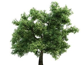 Green Leafy Tree leaf 3D model