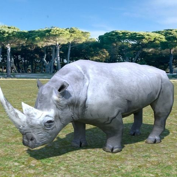 Low Poly African Rhino