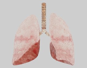3D asset Human lungs fully rigged low poly 2