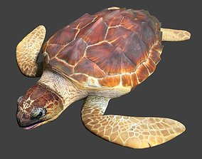 3D model animated ocean Sea turtle