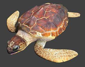 3D model animated Sea turtle