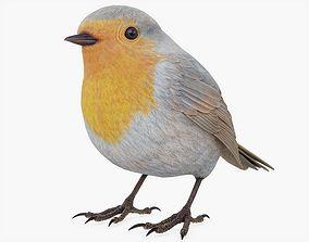 3D model PBR Robin Bird