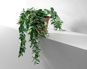 Epipremnum in Pot 3D model