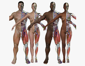 Ultimate Full Body Anatomy Collection 3D model
