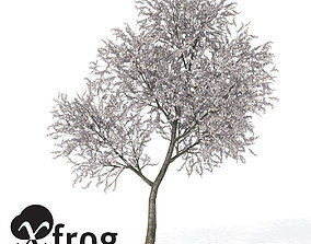 3D model XfrogPlants Sour Cherry