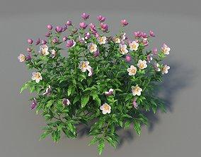 XfrogPlants Helleborus Hybridus 3D