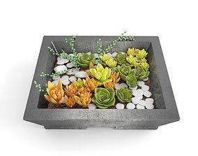 3D Succulents Set - Sensecio and Sedum