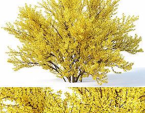 3D model Forsythia Nr4 full bloom - 2 sizes