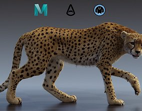 nature Cheetah 3D model