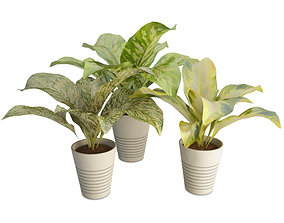Interior Plants Dieffenbachia 3D