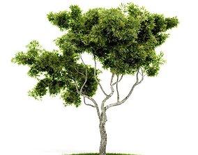 3D model Tree Green Plant