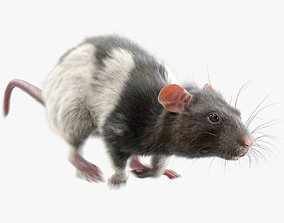 3D model Rat Fur Animated Spotted