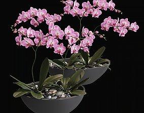 Orchid 1 3D