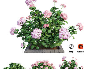 3D model Plants Hydrangea set 14