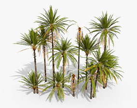 3D model Phoenix Dactylifera Palm Tree