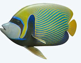 3D model Emperor Angle Fish