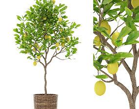 3D model Plants collection 421