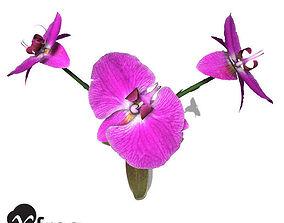 XfrogPlants Moth Orchid 3D model