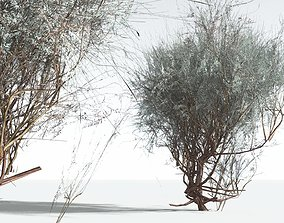 EVERYPlant Big Sagebrush LowPoly 03 --10 Models-- 3D asset