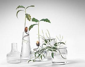 3D Water Plants in Vases
