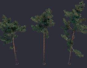 3D model Pine LowPoly