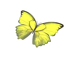Butterfly v1 005 3D model