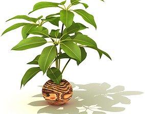 Potted Decorative Plant 3D