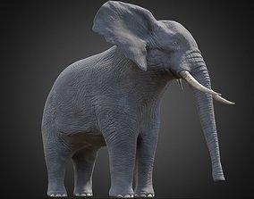 3D asset African Elephant - Loxodonta Africana