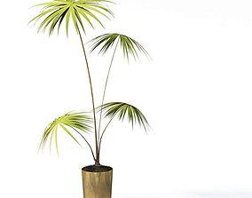 Palm Plant Pot 3D model