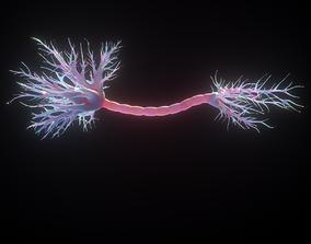 Neuron Human anatomy 3D model
