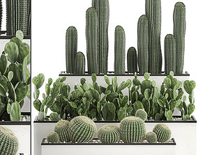 3D model Decorative cactus in white pots for the interior