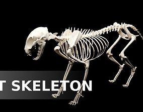 Cat Skeleton 3D asset