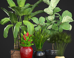 ficus 3D model Collection plants