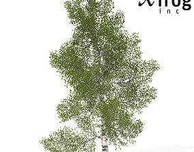 XfrogPlants Paper Birch 3D model