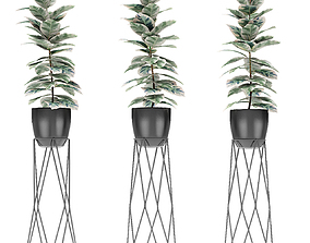 Plant in Pot Flowerpot Exotic Plant trees 3D model