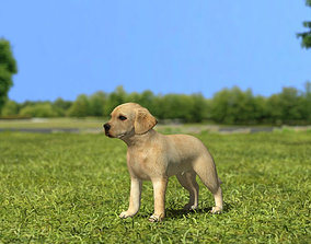 3D Labrador Retriever Puppy