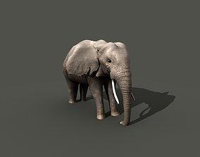 3D rigged African Elephant