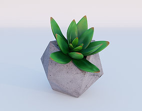 3D model Concrete potted succulent