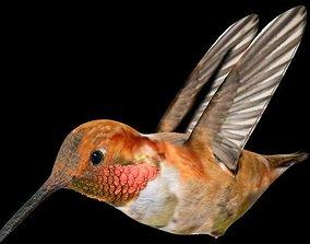 VPArt Rufous Hummingbird 3D model