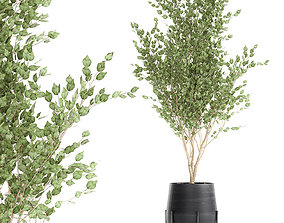 Tree in a black pot for the interior 697 3D