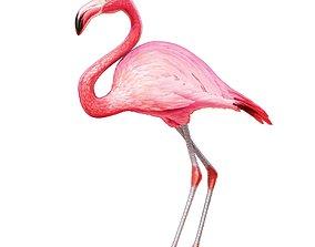 Flamingo bird 3D model