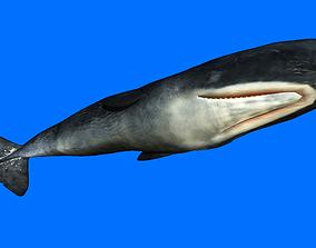 3D asset Sperm Whale