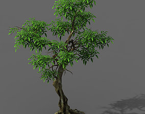 Plant - green tree 1 3D model