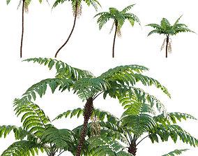 3D model Cyathea cooperi - Australian Tree Fern - 02