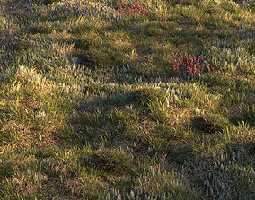 3D model Field grass and corona scatter