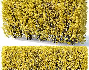 Forsythia Nr2 - hedge H180 cm 3D