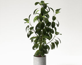 3D model tree ficus elastica