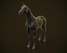 Horse Ecorche 3D print model